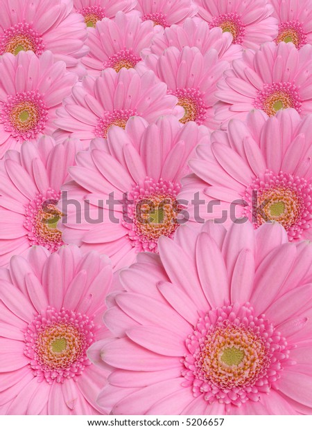 Floral background from pink flowers.