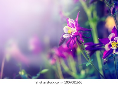 Floral background with purple flowers
