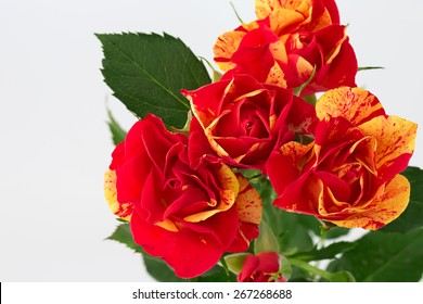 floral background is a rose toned photo