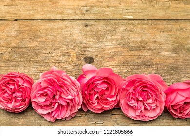 Floral background with row  of pink rose blossoms and copy space on rustic wood