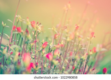 Floral background texture