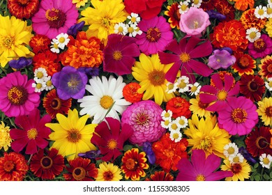 Floral background, top view. The texture of different garden flowers: Pink and yellow. Good backdrop for a greeting or postcard.