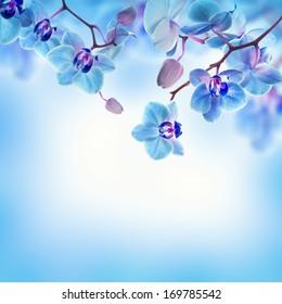 Sky Blue Flower Background Hd