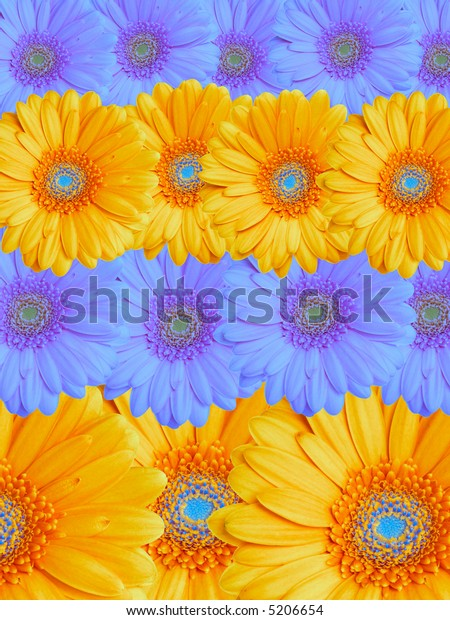 Floral background from yellow and sky blue flowers.