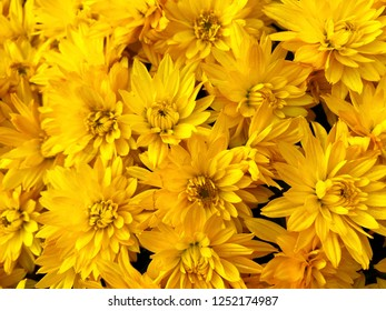 Floral backgrounds and textures - bright asters.