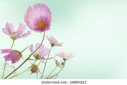 Floral beautiful card.Garden flowers