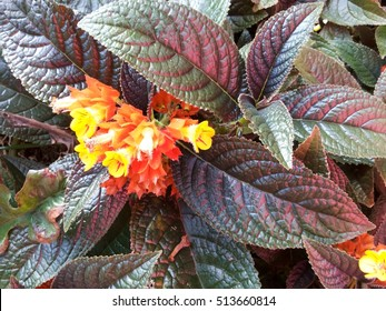 Floral with big green and purple leaves - Bunch of orange and yellow flowers