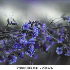 Floral blue-white beautiful background.  Forest blue flowers on a blurred background. Soft focus.  Nature.