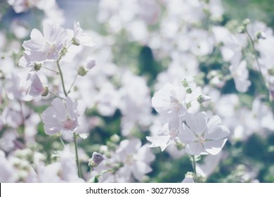 Floral blurred background, spring white flowers defocused photo