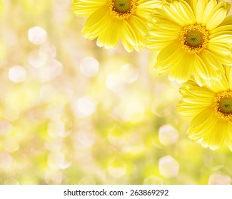 yellow flower background images stock photos vectors shutterstock https www shutterstock com image photo floral border blurred background flowers chamomile 263869292