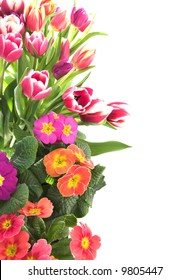floral border of tulips and primrose