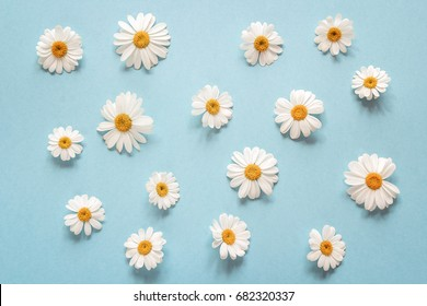 Floral camomile pattern on a blue background. Flat layer, top view.