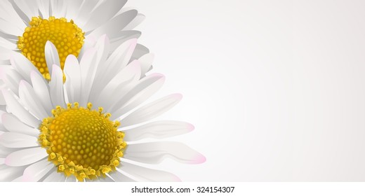 Floral card or banner with daisies