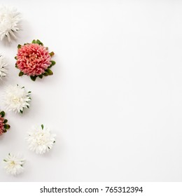 Floral composition made of pink and white aster flowers on a white background. Border frame