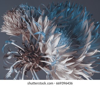 Floral composition on a dark blue background. Pointed flower petals, macro.