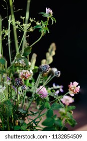 Floral composition with wild flowers (pink clover, white yarrow, trefoil) isolated on black background