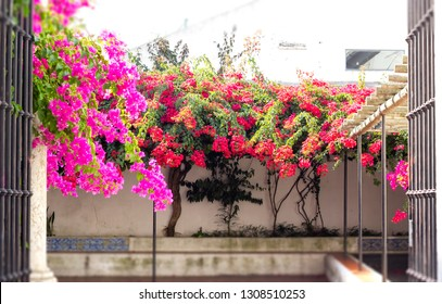 Floral coty yard in Lisbon cyty center : pink and red flowers of bougainvillea behind an open gate