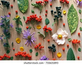 Floral flat lay poster, background. Natural plant arrangement. Flower art, bohemian, zen, yoga, meditation. Plant illustration, botanical, collection, foraged.