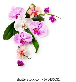 Floral frame. Composition of orchid flowers and leaves isolated on white background clipping path included. Design element. Top view, flat lay