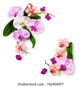 Floral frame. Composition of orchid flowers and leaves isolated on white background. Design element. Top view, flat lay