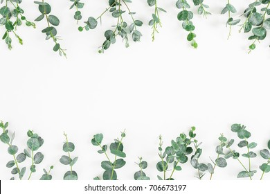 Floral frame of eucalyptus leaves isolated on white background. Flat lay, top view