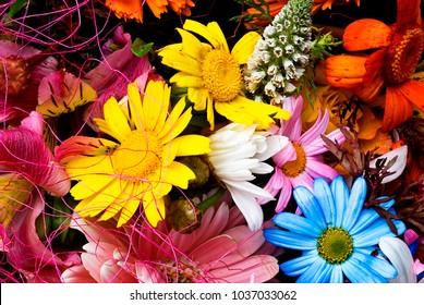 Floral gerberas pattern.