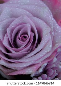 Floral image includes roses and chrysanthemums in shades of lavender purple. Misted water droplets on the petals. Closeup detail.