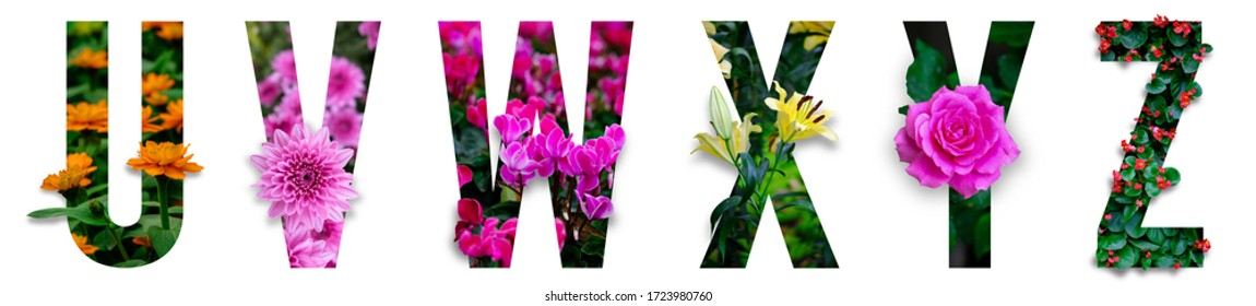 Floral letters. The letters U, V, W, X, Y, Z are made from colorful flower photos. A collection of wonderful flora letters for unique spring decorations and various creation ideas. clipping path