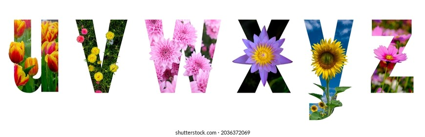 Floral letters. The letters u, v, w, x, y, z, are made from colorful flower photos. A collection of wonderful flora letters for unique spring decorations. isolated background with clipping path