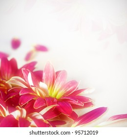 Floral Magenta Flower Background Very Shallow DOF