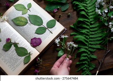 floral mix of fresh cutted, pressed and dried spring flowers and leafs all decorated in rustic style on dark wood background with female hand arranging all soft focus overhead-angle shot