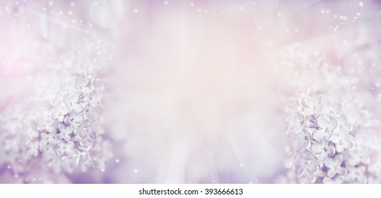 Floral nature background with beautiful light pastel lilac flowers.  Lilac blooming in garden or park, banner