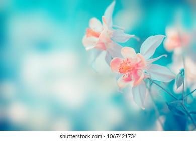 Floral pastel beautiful background with colorful flowers