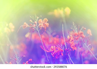 Floral pastel soft blurred background.
