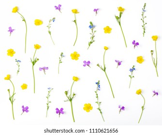 Floral pattern made of meadow flowers isolated on white background. Flat lay. Top view.