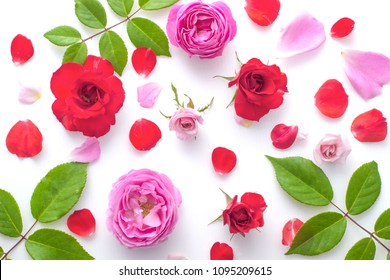 Floral pattern made of pink and red roses, green leaves, branches on white background, Top view, floral pattern, Flowers pattern texture rose petals.