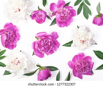 Floral pattern made of pink and white peony flowers and leaves isolated on white background. Flat lay. Top view.