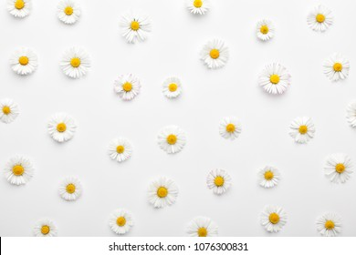 Floral pattern made of white chamomile daisy flowers on white background. Flat lay, top view. Daisy background.