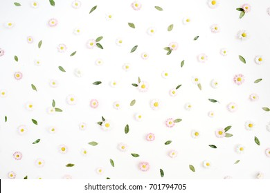 Floral pattern made of white and pink chamomile daisy flowers, green leaves on white background. Flat lay, top view. Daisy background. Pattern of flower buds.