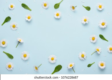 Floral pattern with small daisy flowers leaves and petals on blue trendy pastel background. Flower pattern flat lay top view frame composition with copy space.