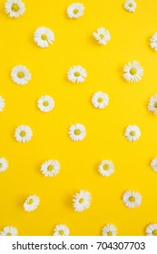 Floral pattern of white chamomile daisy flowers on yellow background. Flat lay, top view. Floral background. Pattern of flower buds.