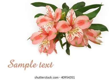 floral postcard background with copy space and clipping path