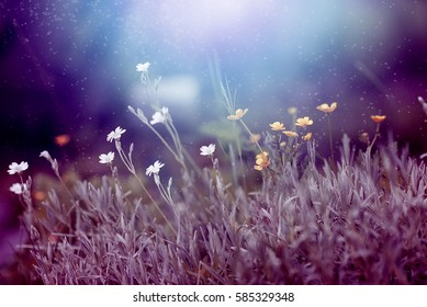 floral  purple  meadow at sunset