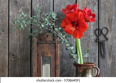 Floral scene with red amaryllis, green branch of eucalyptus in brown clay pitcher, very old rustic wooden lantern, candlestick with candle, vintage scissors on dark wooden background, floral scene