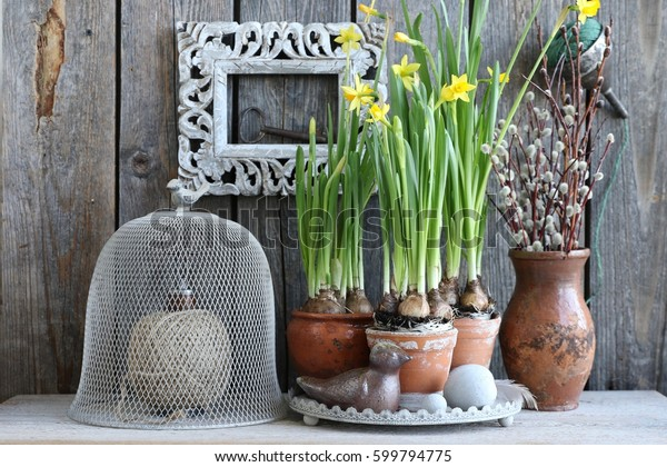 Floral scene with yellow narcissus, daffodils in aged, old ceramic, clay pot, egg, feather, bird on tray, birch wreath, branches of willow in ceramic jar, string wooden bobbin, scissors, cloche, frame