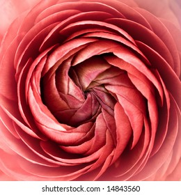Floral spiral abstract. Pink and soft.