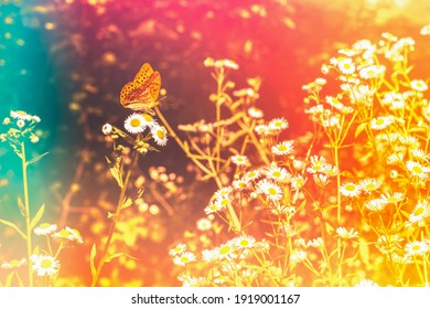 Floral toned background with colourful light leaks. Butterfly on a blooming camomile flower, summer spring botanical design. Romantic feminine style. Retro film photography atmosphere.