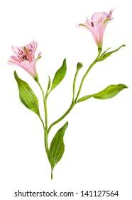 floral vignette based on real flowers
