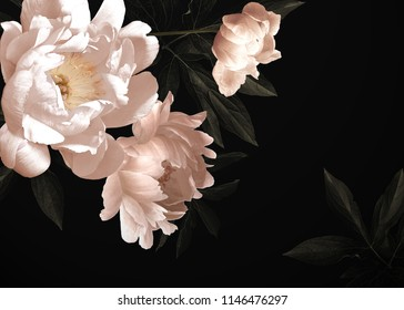 Floral vintage card with flowers. Peonies, tulips, lily, hydrangea on black background.  Template for design of wedding invitations, holiday greetings, business card, decoration packaging - Shutterstock ID 1146476297