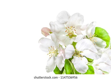 Floral wallpaper. Beautiful white flowers